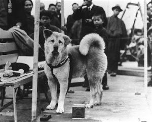 hachiko faithful dog loyal to his master Japanese Japan