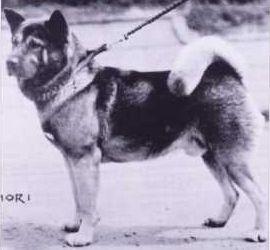kongo go